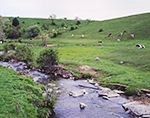 Five Mile Brook with Dairy Cows in Pasture of Rolling Hills, Adirondack Park