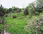 Dairy Pasture with Apple Trees in Bloom, Adirondack Park