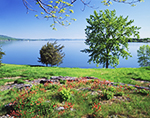 View of Lake Champlain from Crown Point State Historic Site in Spring with Wild Columbines in Foreground, Adirondack Park