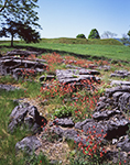 Wild Columbines among Rock Formations in Meadow at Crown Point State Historic Site, Adirondack Park