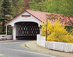 Ashuelot Covered Bridge with White Fence and Forsythia (Built in 1864), Village of Ashuelot, Winchester, NH