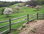 Vermont Countryside with Apple Trees and Split Rail Fence,  Rockingham, VT