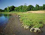 Estuarine Marsh along Shoreline of Potter Cove, Narragansett Bay National Estuarine Research Reserve, Prudence Island, Town of Portsmouth, RI