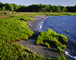 Salt Marsh Grasses and Beach on Shore of Sheep Pen Cove, Narragansett Bay National Estuarine Research Reserve, Prudence Island, Town of Portsmouth, RI