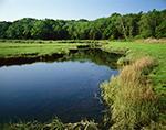 Estuarine Marsh at Kickamuit River, Mt. Hope Bay, Narragansett Bay Region, Warren, RI