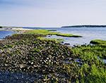 Rocks and Marsh Grasses on Shoreline of Hog Island, Narragansett Bay, Portsmouth, RI