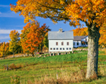 Farm with White Barn in Autumn, Mount Holly, VT