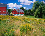 Big Red Barn with Stonework and Cupola with Meadow of Goldenrods and Asters, Yarmouth, ME