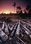 Logging Operation Landing, Birch Hill Wildlife Area, MA