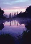 Birch Hill Wildlife Area Wetlands at Sunrise, Royalston, MA