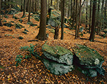 Eastern Hemlock Forest and Rock-strewn Hillside with Carpet of Fallen Leaves, Bigelow Hollow State Park, Nipmuck State Forest, Union, CT
