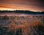 Early Morning LIght over Meadow of Milkweed Pods in Late Fall,  Templeton, MA