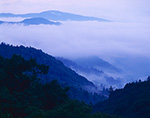 Ground Fog in Newfound Gap, Great Smoky Mountains National Park, NC