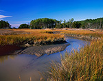 Tidal Creek and Pine Forest in Fall on York River, King and Queen County, Chesapeake Bay Watershed, Roane, VA