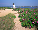 Brant Point Light with Roses (Rosa rugosa) in Bloom along Path, Nantucket Harbor, Nantucket, MA