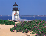 Brant Point Light with Roses (Rosa rugosa) in Bloom, Nantucket, MA