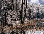Wetland and Forest after Severe Ice Storm, Templeton, MA