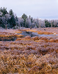 Marsh and Wetlands at Kemp Brook after Severe Ice Storm, Richmond, NH