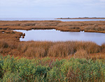 Salt Marshes on Pea Island National Wildlife Refuge, Pamlico Sound, Cape Hatteras National Seashore, Outer Banks, NC
