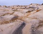 Dune Landscape, Pea Island National Wildlife Refuge, Cape Hatteras National Seashore, Outer Banks, NC