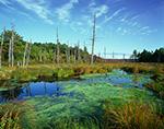 Wetlands, Birch Hill Wildlife Area, Royalston, MA