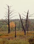 Old Snags and Marsh in Fall, Birch Hill Wildlife Area, Winchendon, MA