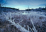 Frosted Wetlands, Birch Hill Wildlife Area, Royalston, MA