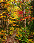 Chimney Pond Trail in Fall, Mt. Katahdin, Baxter State Park, ME