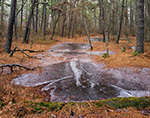 Pools of Ice in Pitch Pine Forest, Pine Barrens, Pinelands National Reserve, Wharton State Forest, Burlington County, Washington, NJ