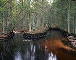 Tulpehocken Creek Flowing through White Cedar Swamp, Pine Barrens, Pinelands National Reserve, Wharton State Forest, Burlington County, Washington, NJ