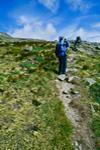 Alpine Garden Trail, Mt. Washington, White Mountains National Forest, NH