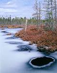Ice, Leatherleaf and Spruce Bog, Baileyville, ME