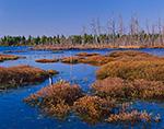 Leatherleaf Bog Wetlands, Pine Barrens, Pinelands National Reserve, Washington, NJ