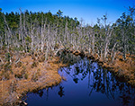 Roberts Brook through Cedar Swamp, Pine Barrens, Wharton State Forest, Pinelands National Reserve, Tabernacle, NJ