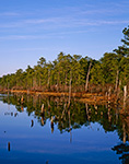 Freshwater Wetlands in Shoal Brook Area in Late Afternoon Light, Pine Barrens, Pinelands National Reserve, Woodland, NJ