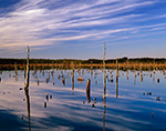 Freshwater Wetlands with Old Snags in Shoal Brook Area in Late Light, Pine Barrens, Pinelands National Reserve, Woodland, NJ