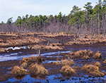 Freshwater Marsh Adjacent to Mullica River with Very Low Water Level, Pine Barrens, Wharton State Forest, Pinelands National Reserve, Washington, NJ