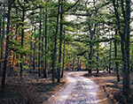Backcountry Dirt Road through Pitch Pine Forest, Pine Barrens, Wharton State Forest, Pinelands National Reserve, Washington, NJ
