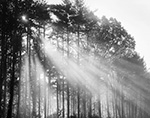 Sunbeams Streaming through Quabbin Woodlands, Quabbin Reservation, New Salem, MA