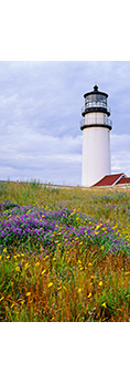 Wildflowers and Cape Cod Light (Highland Light), Cape Cod National Seashore, Truro, MA