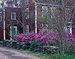 Azaleas in Bloom along Stonewall in Front of Old Colonial Home in Spring, Petersham, MA