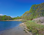 Shoreline of Small Cove in Mashomack Preserve in Spring, Coecles Harbor, Long Island, Shelter Island, NY