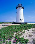 Edgartown Lighthouse with Beach Roses (Rosa rugosa) in Bloom, Martha's Vineyard, Edgartown, MA
