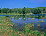 Tussock Sedge and Wetlands in Spring, Marlow, NH