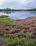 Sapowet Marsh in Spring, Sapowet Wildlife Management Area, Tiverton, RI