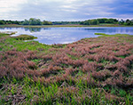 Sapowet Marsh in Spring, Sapowet Wildlife Management Area, Tiverton, RI
