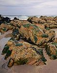 Rocks and Barnacles near Shorts Sands Beach, York, ME