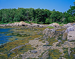 Rocks and Seaweed along Shoreline of Lower Goose Island, Casco Bay, Harpswell, ME