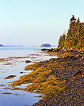 Early Morning Light on Seaweed and Rocky Beach along Shoreline of the Eastern Island of The Goslings, Casco Bay, Harpswell, ME