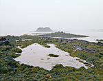 Tidal Pool and Seaweed on Bates Island with View out to Cliff Island in Fog, Casco Bay, Harpswell, ME